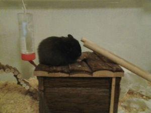 Luna uudessa kodissaan