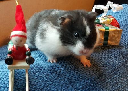 Ottilian joulukuva